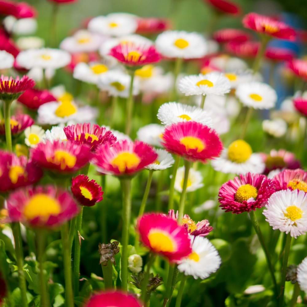 DD - project image - garden centre colorful-colourful-desktop-backgrounds-909_Websize.png