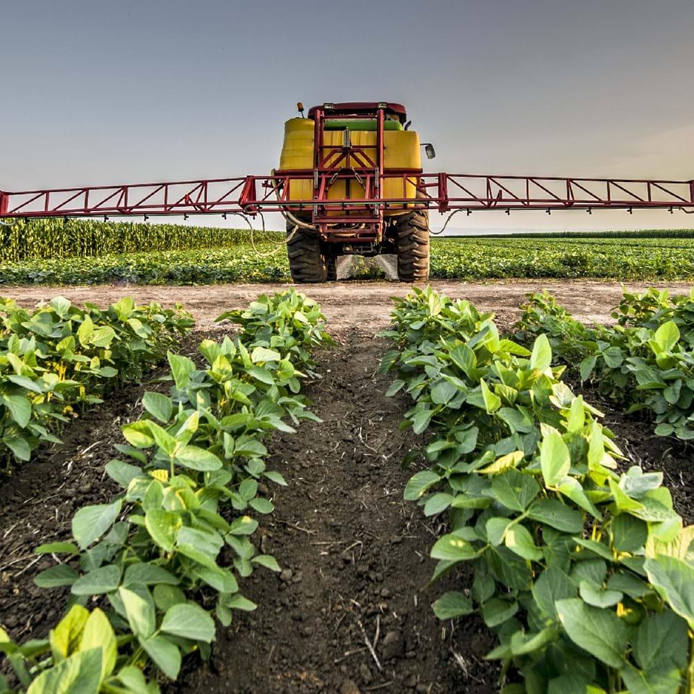 DD fresh produce - project image - shutterstock_665947546_Websize.png